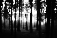 Blindet (stefankamert) Tags: blindet fores trees sun blur blurry noir blackandwhite blackwhite abstract stefankamert sony rx1r rx1 mirrorless fullframe zeiss 35mm noiretblanc landscape