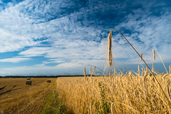 Harvest Days (Slav.Burn) Tags: farm harvest grains blue sky skycolors clouds countryside pentaxart smcda15mmf4limited