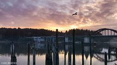 Waterfront (Nick Kanta) Tags: bird bridge clouds color docks florence oregon oregoncoast outdoorphotography reflection sky sunset water iphone7 iphoneography