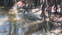 "Bird at J.N. ""Ding"" Darling National Wildlife Refuge (_TheBigF) Tags: usa florida fluss wald tier 2019"