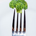 Broccoli on fork on white background