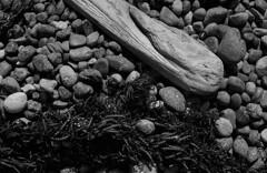 Washed up (bingley0522) Tags: nikkormatftn micronikkor55mmf35 trix diafine epsonv500scanner pointlobos montereycounty beach kelp driftwood coastalcalifornia autaut ordinarythings commonplacethings