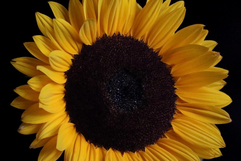 Beliebte Blumen Die Beliebtesten Blumen Der Welt Vsco