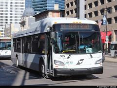 Winnipeg Transit #365 (vb5215's Transportation Gallery) Tags: winnipeg transit 2018 new flyer xd40 xcelsior