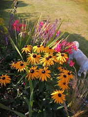 Photo of Beautiful summer evening around the flower beds.