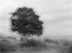 Multi-Expo: Large Tree by the Beach (LarsHolte) Tags: pentax 645 pentax645 645n 6x45 smcpentaxfa 75mm f28 120 film 120film analog analogue kosmo foto mono 100iso rodinal aph09 mediumformat blackandwhite classicblackwhite bw monochrome filmforever filmphotography ishootfilm larsholte homeprocessing multiexpo multiexposure tree beach