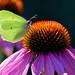 Explore your garden / Entdecke deinen Garten