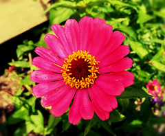 so complex, so simple (77ahavah77) Tags: flower blossom maine outside nature pink simplicity plant