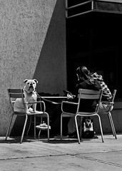 Hangin With My Peeps (thelearningcurvedotca) Tags: briancarson canada canadian ontario thelearningcurvephotography toronto animal background blackandwhite bnw breed bulldog candid city cute dog downtown face female foto life light man monochrome outdoors outside patio people person pet photo photograph photography portrait scene sitting street table urban view woman awardflickrbest bwartaward bwmaniacv2 bej blackwhite blackwhitephotos blackandwhiteonly bwemotions cans2s noiretblanc torontostreetcandids true2bw yourphototips