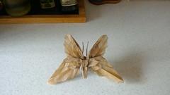 """Butterfly TH"" designed by Satoshi Kamiya folded by me (webb.colin.1) Tags: origami butterfly butterflyth satoshi kamiya"