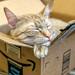 Amazon Prime kitty