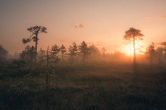 A new dawn (MattiBo) Tags: finland scandinavia suomi summer sunrise maisema moody mist morning minimalistic colors autumn landscape landscapes outdoor nikkor nikon travel tranquil trees