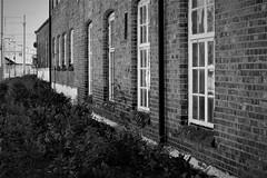 from a railway station (EllaH52) Tags: house building brick redbrick shrubbery monochrome blackwhite greyscale railway station