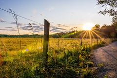 Laajalahden Luonnonsuojelualue (Mikael Neiberg) Tags: landscape sunset protectedarea espoo laajalahti fence backlight flare star nikond7100 sigma1835mmdchsmart lensflare