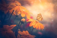 Sunny garden (Ro Cafe) Tags: garden flowers butterfly sunlight yellow dof softfocus textured summer pentacon sonya7iii extensiontubes
