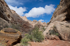The Grand Wash (Bill Herndon) Tags: capitolreef flickr grandwash k30 navajosandstone pentax usa utah cliffs desert published sandstone sky wrherndon torrey unitedstatesofamerica