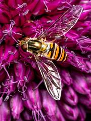 20190716-DSCF0174.jpg (Indigo Red Photography) Tags: fuji insects macro art 80mmmacro