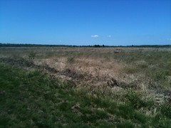 Photo of Whixall Moss