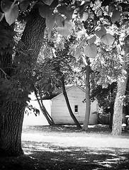 Solitary Window (Demmer S) Tags: building trees window exterior foliage branches leaves one 1 single solitary urbanexploration outdoors street streetphotography shootthestreet streetshots documentary urban outside urbanphotography streetscene tree lines windows light shadow house garage sunlight shadows suburban houses garages buildings home bw monochrome blackwhite blackandwhite blackwhitephotos blackwhitephoto