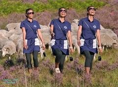 Happy (Stefan Beckhusen) Tags: girl woman happy laughing sheep heath heathland nature outdoor