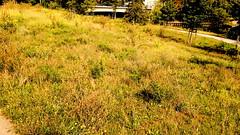 gwb | wiese (stoha) Tags: gwb berlin berlino deutschland deuitsland germany germania berlijn stoha soh guessedberlin tiergarten gwbsurfer321meins berlintiergarten berlinspandauerschifffahrtskanal kanal brücke