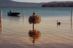 Green Point, Wallis Lake, NSW (Peter.Stokes) Tags: australia australian coast colour colourphotography landscape landscapes nsw nature newsouthwales outdoors photo photography sky vacations water lake wallislake wallis bootibootinationalpark