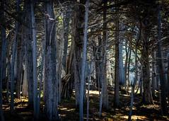Del Monte Forest No.2 (CDay DaytimeStudios w /1 Million views) Tags: ca pebblebeach water 17miledrive pacificcoasthighway bluesky california highway1 montereyca pacificgrove carmelca ocean pacificcoast beach sky seascape coastline landscape rocks montereybay
