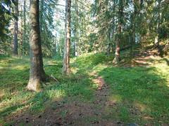 Romsåsen (mtbboy1993) Tags: romsåsen askim kykkelsrud norge norway forest skog indreøstfold østfold sonny sti tursti singletrack sonycameraapp rawtherapee