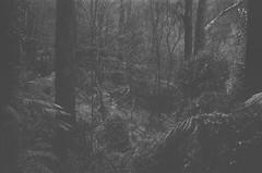Forest (Matthew Paul Argall) Tags: smenasymbol 35mmfilm blackandwhite blackandwhitefilm kentmerepan100 100isofilm forest plant plants
