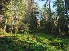 Romsåsen old water reservoir (mtbboy1993) Tags: romsåsen askim kykkelsrud norge norway forest skog waterreservoir indreøstfold østfold sonny sti tursti singletrack sonycameraapp rawtherapee