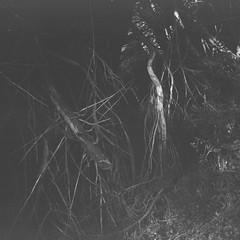 Branches (Matthew Paul Argall) Tags: pouvastart fixedfocus 120film 120 mediumformat blackandwhite blackandwhitefilm fomapan100classic 100isofilm