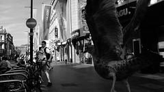 Street (MJ Black) Tags: liverpool liverpoolstreetphotography mono monochrome monochromephotography merseyside north northwest people peoplephotography portrait portraits street streetphoto streetphotograph streetphotography streets streetscene streetportrait shadows shadow highcontrast blackandwhite blackandwhitephotography bw bwphotography x100f 23mm fuji fujix100f fujifilmx100f fujifilm f8 gull seagull seagulls bird
