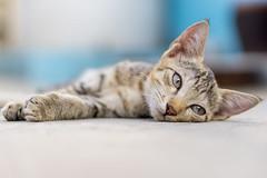 Kitty_cat (symanbiswas) Tags: sonyalpha sonya6000 sonyimages sonyindia sonyalpha6000 sonyalphaimages alpha6000 alphaimages alphaphotography cat kitten