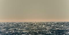 Baleine_5915 (Roucoun) Tags: whale d500 nikon humpback sunset waving greeting ecology one planet