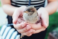 (Natalia K.) Tags: hands bird fujifilmx100f nataliaklimovaphotography