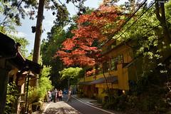 京都・貴船 ∣ Kibune・Kyoto【EXPLORED】 (Iyhon Chiu) Tags: 貴船神社 tree japan forest japanese kyoto shrine 京都 日本 kibune kifune 貴船 紅葉