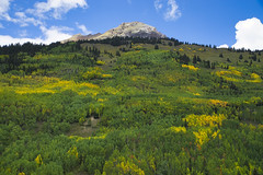 So Many Beautiful Trees (Bernie Emmons) Tags: trees mountains sanjuannationalforest aspens pines clouds sunshine