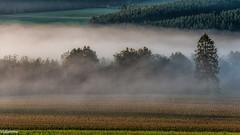 19082019-DSC_0029 (vidjanma) Tags: taverneux arbres brume couleurs matin