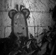 Little Graffiti in the Bushes (Haruhara_Izzy) Tags: yashica mat 124g ilford hp5 cinestill df96 du dunedin