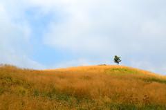Solitary Tree [Pulfero - 18 August 2019] (Doc. Ing.) Tags: 2019 nikond5100 savogna friuli friuliveneziagiulia fvg ud nordest italy hiking trekking walking alps matajur julianalps trekkingarcobaleno mountains landscape slaviafriulana
