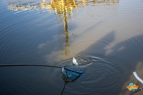 Viswedstrijd-6