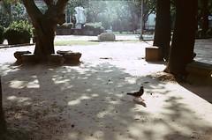 Sunny afternoon. (蒼白的路易斯) Tags: motionfilm 電影底片 kodakvision350d yashicaelectro35gsn 底片攝影 底片