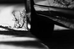 you and me (nicolasheinzelmann) Tags: pflanze auto troittoir gehsteig licht schatten kontraste details tiefenunschärfe matte sw schwarzweiss urban stadt schweiz altstadt bern bw blackandwhite canoneos5dmarkiv 5dmkiv 5dmiv canonef135mmf2lusm day dslr switzerland lights oldtown light august nicolasheinzelmann 24august2019 shadow contrasts