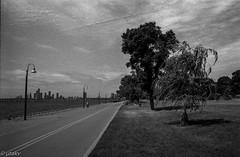 Along the lake (Uta_kv) Tags: homedevelped slr filmcamera blackandwhitephotography supermulticoatedtakumar ilfordhp5 rodinal rangefinder fujicast801 hp5plus1600 hp5 35mm film fujica