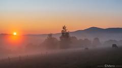 Matin (Nu Mero) Tags: coucherdesoleil paysage brouillard valléedevillé nature brume leverdesoleil sunrise sunset neuveéglise basrhin france