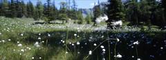 Wiesenpunk (fluffisch) Tags: fluffisch rauris pinzgau hohetauern ritterkopf hasselblad xpan panorama 45mmf40 rangefinder messsucher analog slide fuji fujichrome velvia velvia50