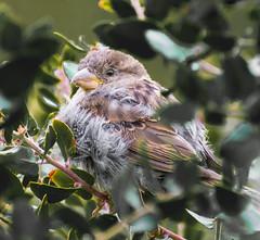 No Hiding. (Omygodtom) Tags: wildlife dof selectivefocus natural nikkor outside trail picture algorithm flickriver usgs
