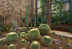 Viele Stacheln (KaAuenwasser) Tags: kakteen kaktus stacheln dornen pflanzen kakteenhaus haus gebäude gewächshaus botanischergarten karlsruhe mauern anzahl ausstellung schaubeet beet glas fenster historisch