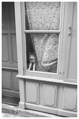 Waiting (Mi-Fo-to) Tags: p6231994a bretagna 2013 francia estate gatto cat summer olympus m5 door porta tenda france bretagne curtain window finestra chat breton