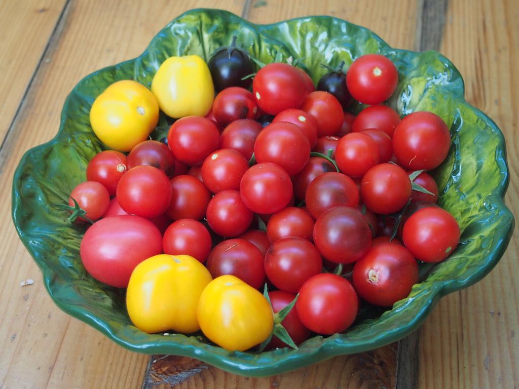 фото: Урожай помидоров в 2019 году